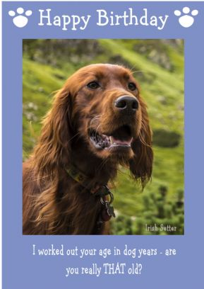 "Irish Setter-Happy Birthday - ""Are You Really THAT Old"" Theme"